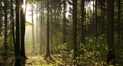 stellaco-bosbouw